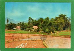 VIÊT-NAM  Quang Ngai  Paysage De La Campagne  CPM Année 1990  Photo : Hoang-Du C Thu - Vietnam