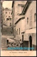 Como - Via Serbelloni A Bellagio Salita Con La Vacca - Cow - Como