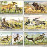 Le Antilopi Cod. Liebig.011 - Liebig