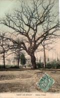 Cpa 1907, La Forêt De SENART, Près Brunoy, Le Chêne Prieur, Personnage Pour L'étalonnage ! (21.28) - Brunoy