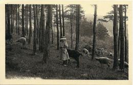 CPA CHAUFFAILLES  Un Troupeau Dans La Montagne  Chevres Et Moutons - Agriculture