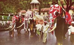 Kandy Perahere - Sri Lanka (Ceylon)