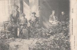Asse - Assche - La cueillette du houblon (top animation, brasserie, 1905) (vente unique)