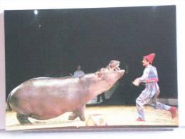 PIERINO ET L´HIPPOPOTAME - CIRQUE KRONE 1989 - 300 EX. - ETAT NEUF - Cirque
