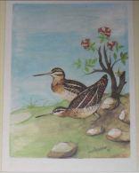 ANIMALI - Uccelli - Beccaccino - Gallinago Gallinago - Caccia - Birds
