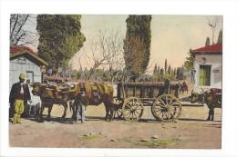 L1588 - Salonique Attelage De Buffles - Grèce