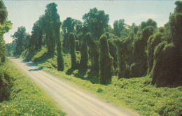 Mississippi Jackson Kudzu Vines Along The Highway