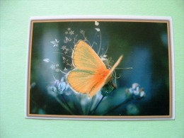 Calendar With Butterfly (Lycaenidae) - Calendars
