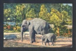 *Indian Elephants* Ed. Stehli Nº 180. Nueva. Señales De Uso. - India