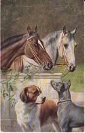 Great Dane  Grand Danois  Dogge  Dogue  Allemand  Horses  Bernardiner  Bernard  C.Reichert Hunde, Cane  Old Tuck's  Cpa. - Honden