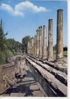 AQUILEIA - Udine, Foro Romano    1968 - Udine