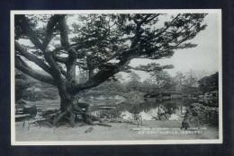 Takamatsu. *Scene Taken In Southern Garden Of Ritsurin* Nueva. - Otros