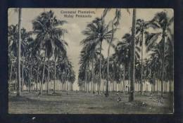 Malaysia. *Malay Peninsula. Cocoanut Plantation* Nueva. Roce Al Dorso. - Malasia