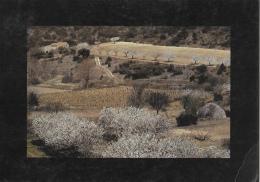 Provence Intérieure - Le Lubéron - Vergers Au Printemps - Photo Daniel Faure
