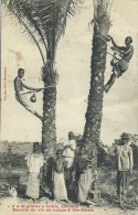 Congo Français - Récolte Du Vin De Palme à Ste-Marie ( Voir Verso ) - Congo Français - Autres