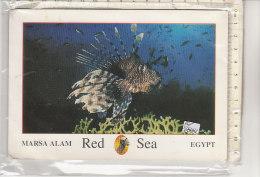 PO6808C# EGITTO - EGYPT - MARSA ALAM - RED SEA - PESCI TROPICALI   VG 2004 - Marsa Matruh