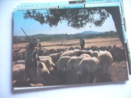 Palestina Bethlehem Sheep - Palestina