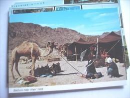 Palestina Beduin Near Tent - Palestina