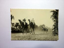 LARGEAU TCHAD - Course de chameaux - Editions Photos Tchad R.G Fort Lamy