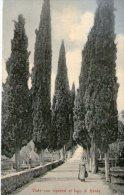 VIALE CON CIPRESSI AL LAGO DI GARDA - POSTED FROM LIDO PALACE HOTEL RIVA - LAKE GARDA - AUSTRIA -  AUSTRIAN STAMP 1910 - Italy