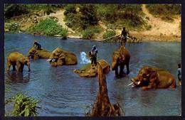 Chiang Mai. *Working Elephants Take A Bath...* Nueva. - Tailandia