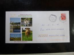 PAP Beaujard Vache Limousine - Cows