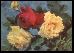 USSR Russia 1972 Stationery Postcard 3kop. Roses - Rose