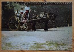 34 : Castelnau-le-Lez - Groupe Folklorique Lou Roc De Substancioun - Départ Pour La Fête - Animée - Attelage -(n°2315) - Castelnau Le Lez