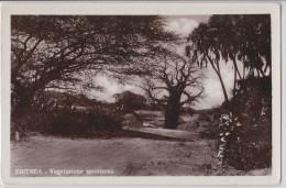 Erythrée - Eritrea - Vegetazione Spontanea - Erythrée
