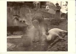 Chaudes Aigues-les Auvergnats-le Lavage Du Cochon à La Fontaine Chaude-photo 1965--cpm - Autres Communes
