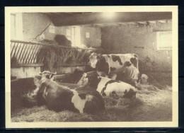 St FARGEAU .  Ferme Du Chateau ,  Vaches A L'écurie . Voir Recto Verso    (S742) - Paysans
