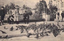 Jardin De MONTE CARLO - Charmeuse, Gel.1912 - Monte-Carlo