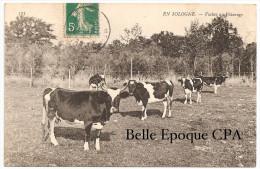 En SOLOGNE - Vaches Au Pâturage ++++ ND Phot., #173 +++++ ANIMÉE / Vers Cernay, 1907 - Centre-Val De Loire