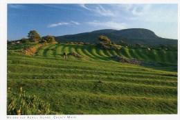 Postcard - Meadows on Achill Island, Mayo. 2014