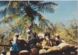 AMERIQUE,ANTILLES,HAITI,i Le  Hispaniola,,ile Découvert Par Christophe Colombe,marché,market,pro Ducteur,paysan,vendeur - Haïti
