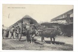 L1653 -  Une Charrettte à Boeufs - Viêt-Nam