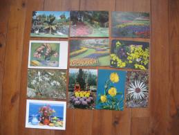 Thème Fleurs    11 Cartes De Fleurs    Edelweiss, Chrysanthèmes, Lauriers Roses De Van Gogh - Cartes Postales