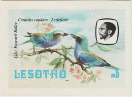 CARTOLINA - LESOTHO - Lesotho Birds - Philatelic Bureau - Not Used - Lesotho