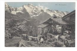 L1669 -  Die Jungfrau Chalet Et Vaches - BE Bern