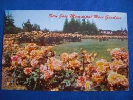 San Jose Municipal Rose Gardens, California - San Jose