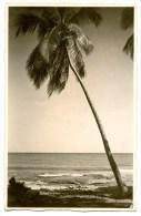 Venezuela, Palme Im Wind, 28.12.1931 - Venezuela