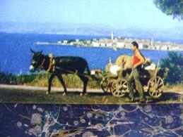 Izola-donkey   (2758)