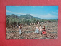 > Puerto Rico  Cutting Sugar Cane  Ref 1465 - Puerto Rico
