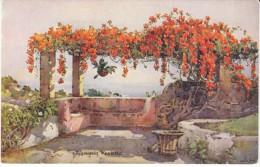 Madeira Portugal, Bignonia Venusta, Artist Image, C1910s/20s Vintage Postcard - Madeira