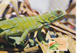 D17897 CARTE MAXIMUM CARD FD 1987 NETHERLANDS ANTILLES - IGUANA CP ORIGINAL - Reptiles & Amphibians