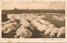 L53_721 - Paysage D'Orient Série VII No 2575 - La Grande Prière - Tunisie