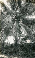 "MALAYSIA - RP  Untitled ""Cooconut Palm"" - ""Penang"" - Malesia"