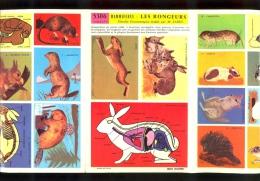 Fiche Illustrée Didacto JESCO Imagerie : LES RONGEURS Lapin - Animales