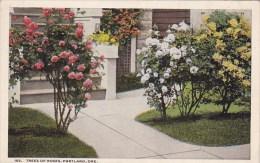 Trees Of Roses Portland Oregon