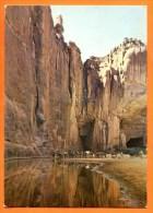 TCHAD - ( ENEDI) - Guelta d'Archa� - chamaux � l'abrevoir